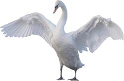 :swanspreadattack: