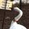 :swan_aggressive: